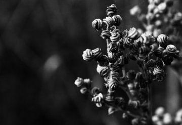 The little things van Carmen Fotografie
