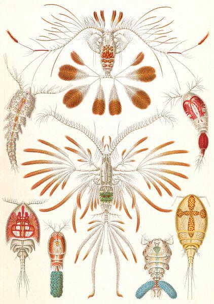 The Art and Science of Ernst Haeckel, copopod crustaceans, Copepoda, Ruderkrebse, van Liszt Collection