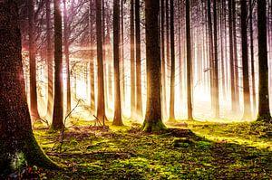 Herbstwald im Sonnenschein