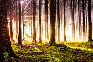 Autumn forest in sunlight van Nicc Koch