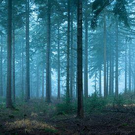 Frühmorgendlicher Fichtenwald von Jeroen Lagerwerf