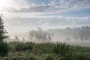 Nationaal park De Meinweg Roode Beek in optrekkende mist van