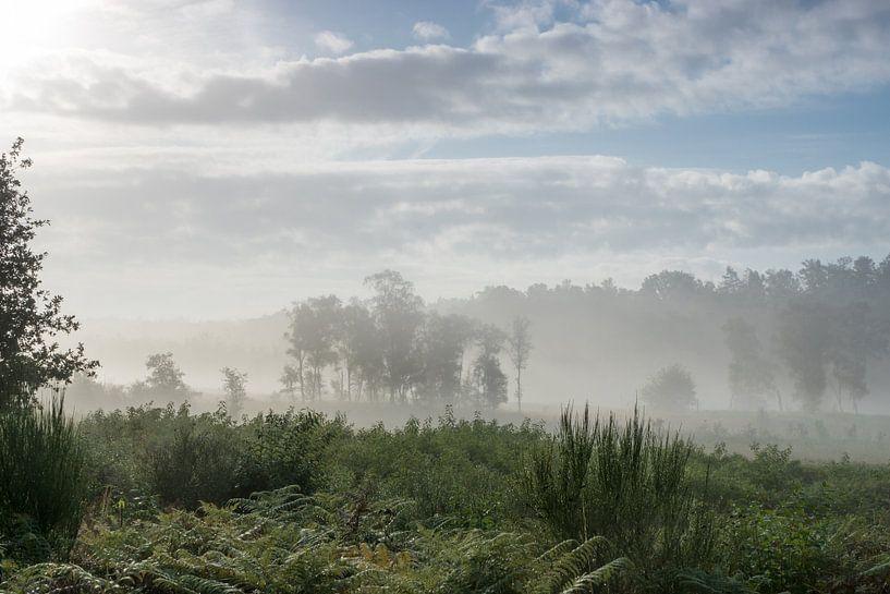 Nationaal park De Meinweg Roode Beek in optrekkende mist van Nico de Lezenne Coulander