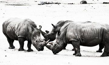 Rhino group van melissa demeunier