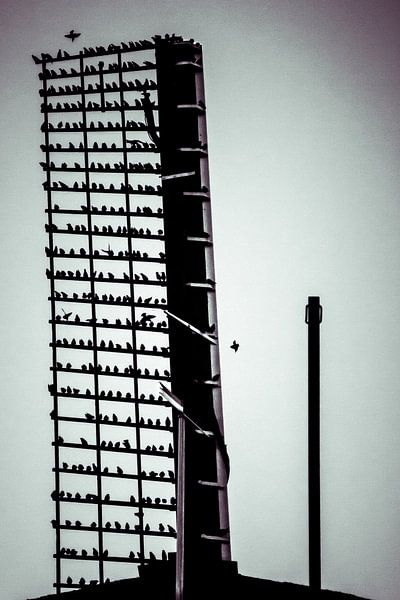 vogels op de wiek van Bas Nuijten