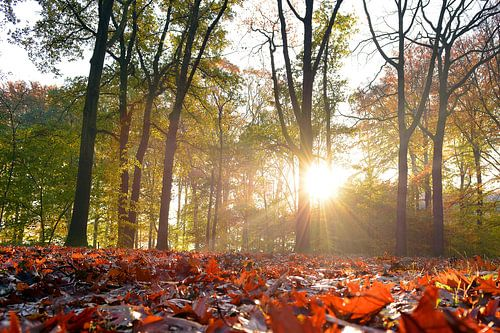 Zonnige herfst van Arno Wolsink