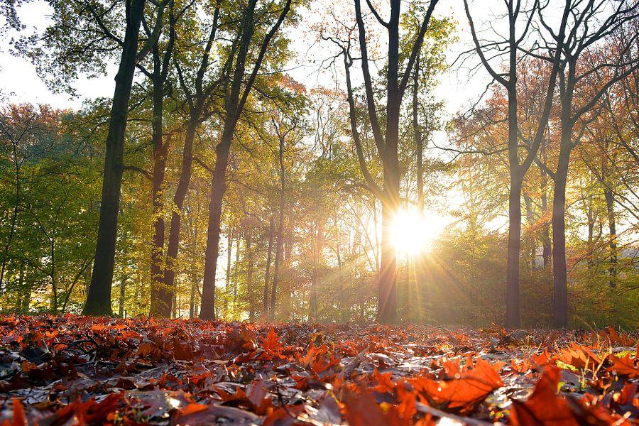 Zonnige herfst