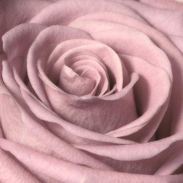Roos van Jessica Berendsen