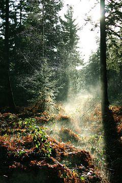Forêt brumeuse sur Milou van den Bemd