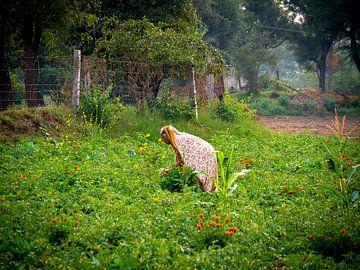 Die Blumenfrau auf dem Lande der Indianer von Rik Pijnenburg