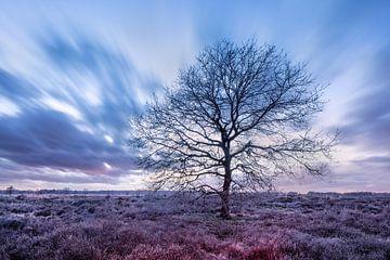 Mooie naakte boom op een heide in de winter van Tony Vingerhoets
