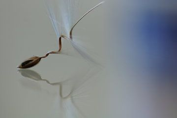 Ballet von Carla Mesken-Dijkhoff
