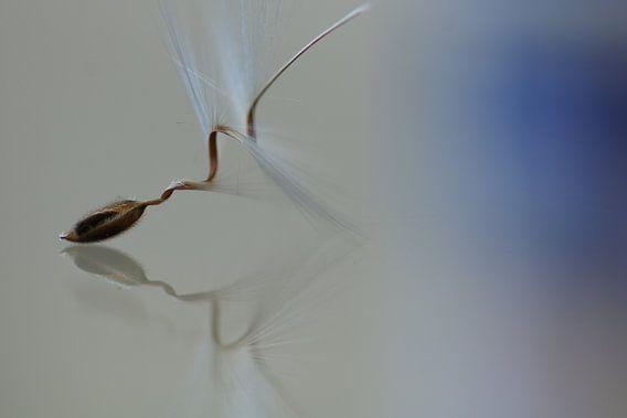 Ballet van Carla Mesken-Dijkhoff