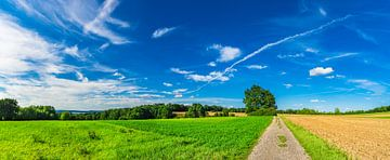Panorama van zandweg langs landelijke velden en bewolkte blauwe hemel van Alex Winter