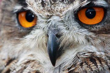 The eyes have it van Anneke Verweij