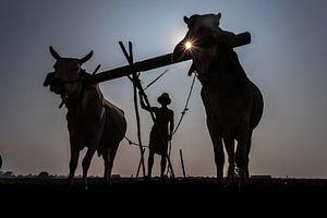 Mandalay agriculteur labourant à la manière traditionnelle des terres arables avec une charrue et de