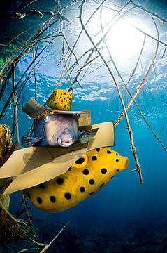 box fish van Dray van Beeck
