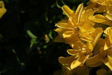 Bloemen in Italië von Charissa Oudejans