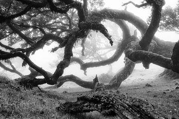 Bijzondere boom in Madeira van Michel van Kooten