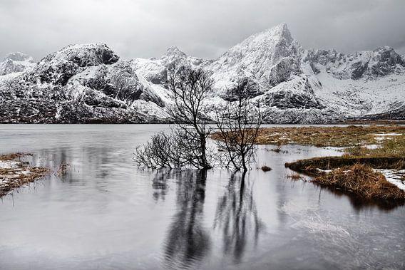 Baumspiegelung im See vor einer winterlichen Bergkette