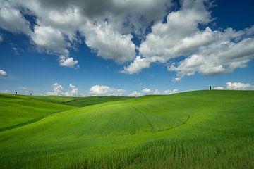 Golvende groene heuvels in Toscane van Edwin Mooijaart