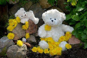 Witte Teddyberen van Claudia Evans