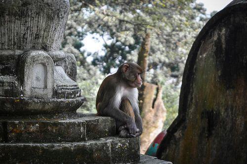 Monkey See von Dennis Timmer
