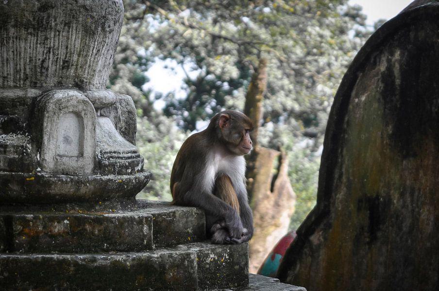 Monkey See van Dennis Timmer