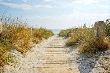 Weg zum Strand in Glowe auf der Insel Rügen von Stefan Böhme