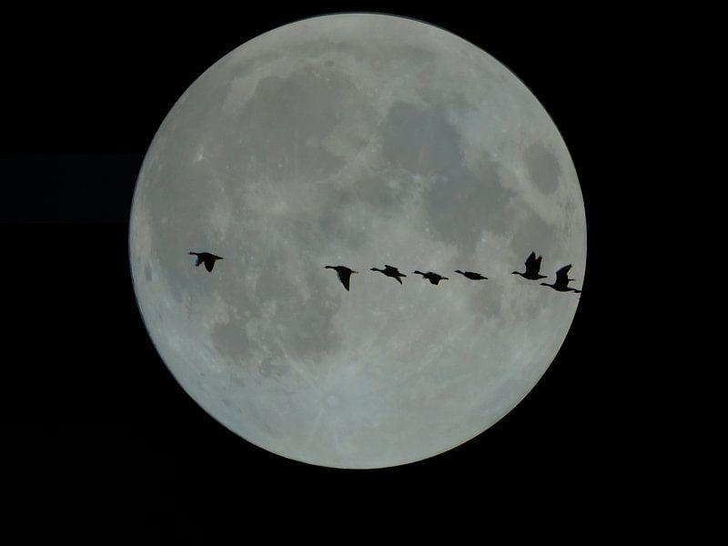 Volle maan met vliegende ganzen
