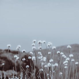 Bergbloemen 2 van Pascal Deckarm