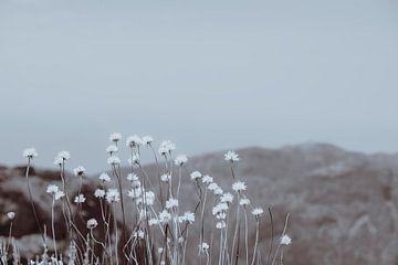 Bergblumen 2 von Pascal Deckarm