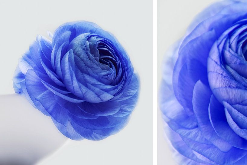 white + blue von Claudia Moeckel