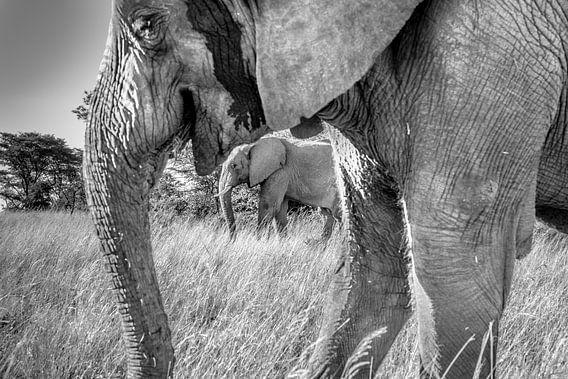 Elephants van Claudia van Zanten