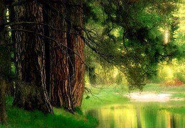 mijn favoriete plek in de natuur waar ik graag verblijf. van Cor Heijnen