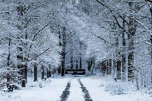 Winter in het Nietapsterbos bij de Meester Postumabank