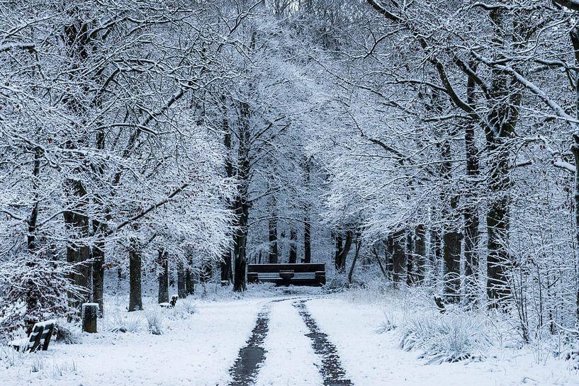 Winter in het Nietapsterbos bij de Meester Postumabank van Hessel de Jong