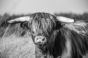 Stoere Schotse Hooglander, zwart-wit van Patrick Verhoef