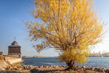 Herbstliche Weide am Oestricher Kran, Rheingau van Christian Müringer