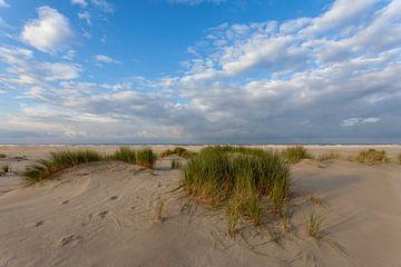 Duinen landschap. van Albert Mendelewski