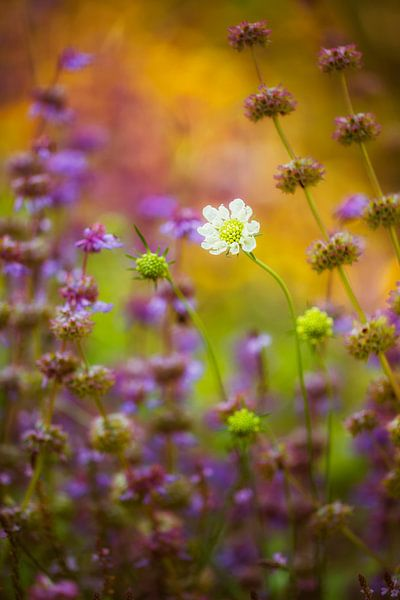 zomerbloemen van Daniela Beyer