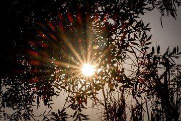 Flared sun