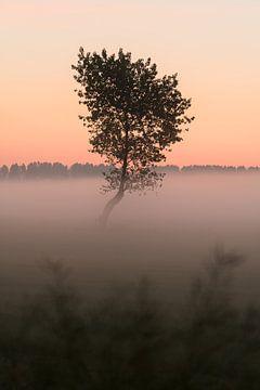 Der kleine Baum im Nebel von Mirac Karacam