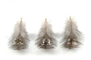 Veertjes / Feathers / Plumes / Gefieder van