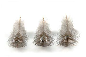 Veertjes / Feathers / Plumes / Gefieder von