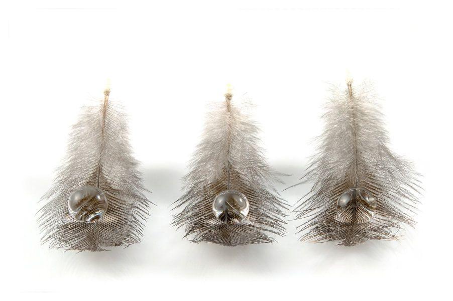Veertjes / Feathers / Plumes / Gefieder van Tanja van Beuningen