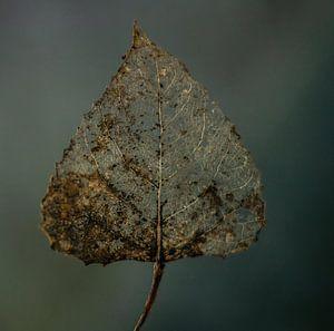 Blatt Natur von Mirjam Bouma