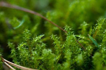 Waldboden von Anita van Hengel
