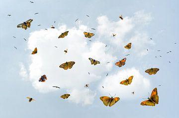 Vlieg uit - er wacht een wereld van Hannie Kassenaar
