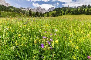 Bloemenweide in de bergen van